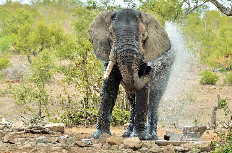 Explore the ancient elephant trail in Kruger National Park.