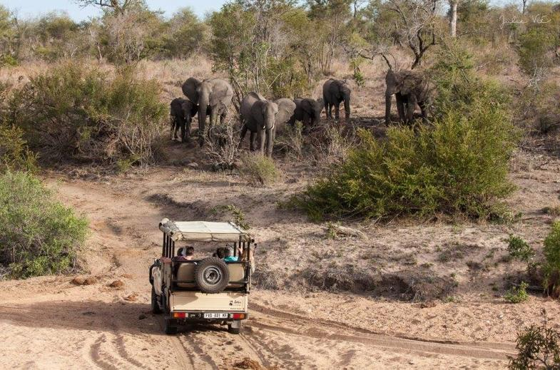 Up close wildlife encounters on your game drive.