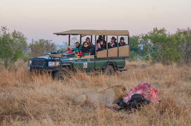 Venture into the bush on daily guided game drives.