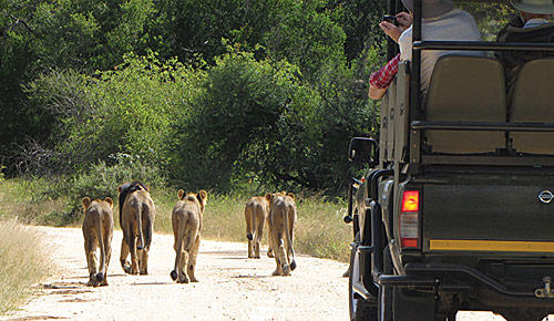 Game drives with Kruger Park Safaris.